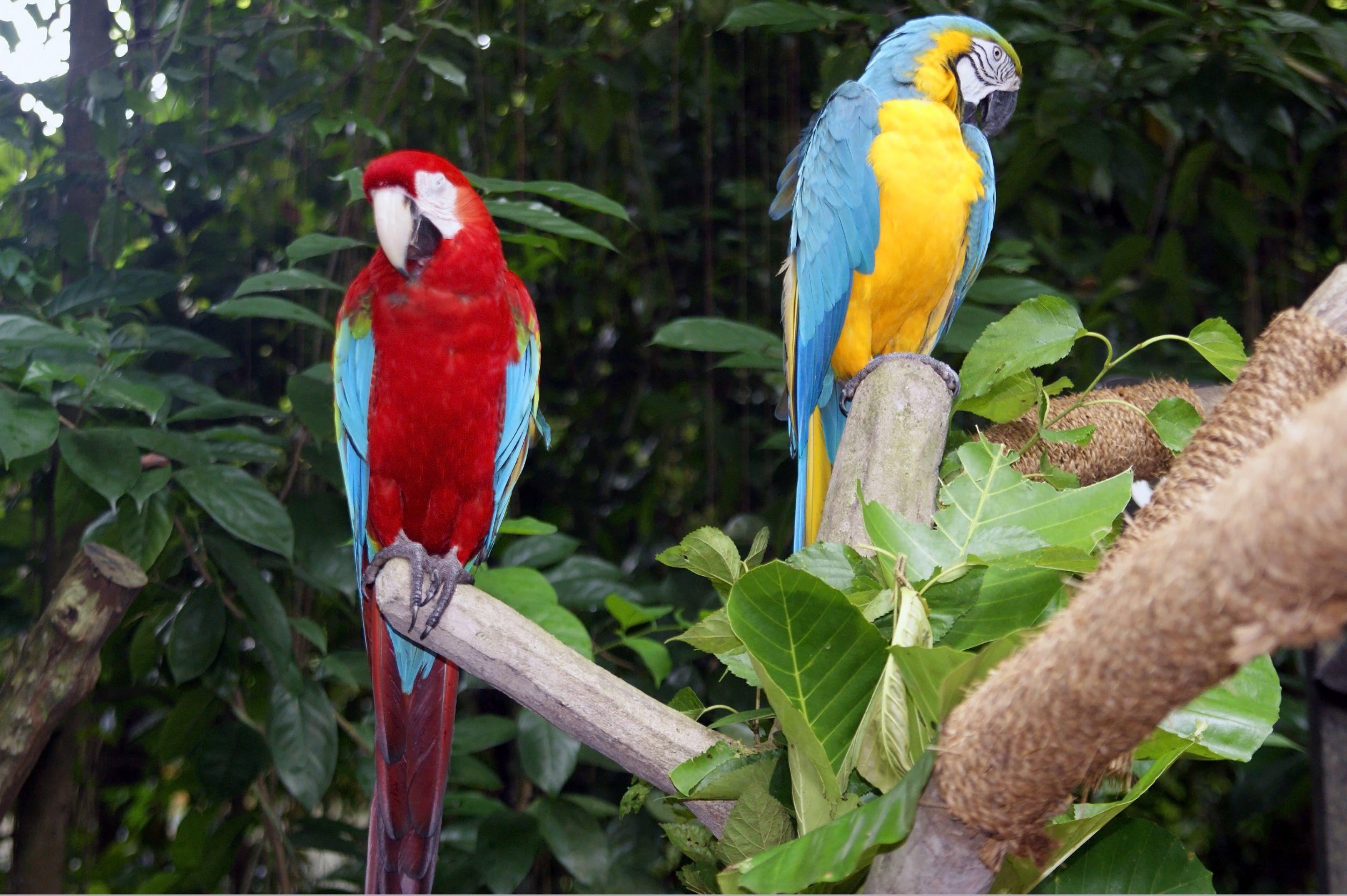 حديقة الحيوانات سنغافورة